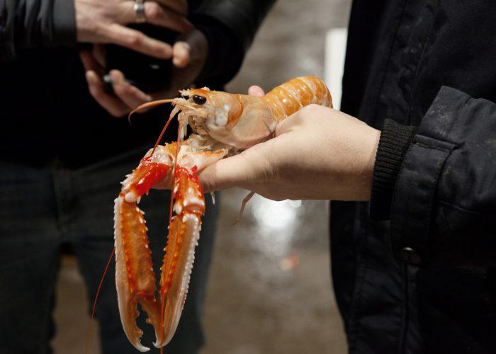Kräftfiskepaket på Slipens Hotell i Fiskebäckskil